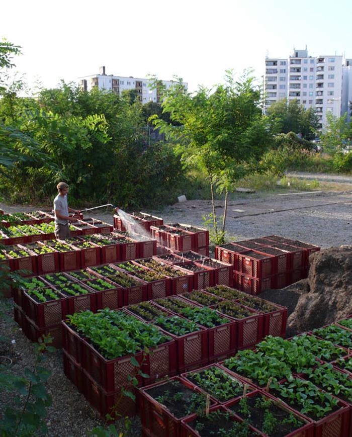 urbanelandwirtschaft prinzessinnengarten1klein1 Alles im grünen Bereich