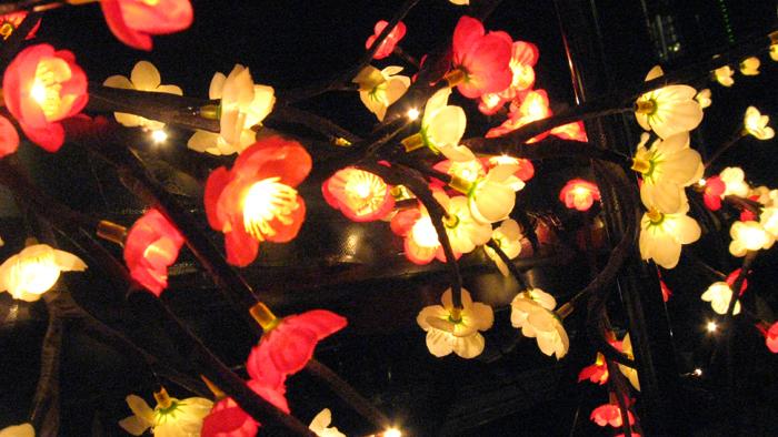 angus julia stone Bild 276 Zwischen Kirschblüten Lampen   Angus & Julia Stone live